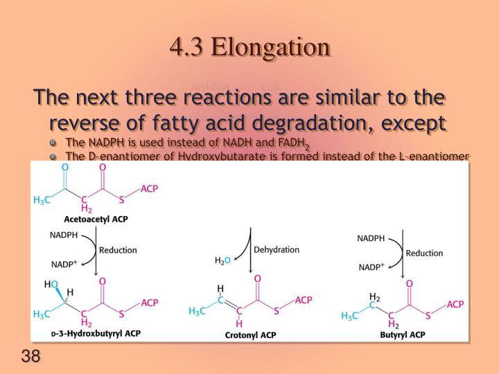 4.3 Elongation