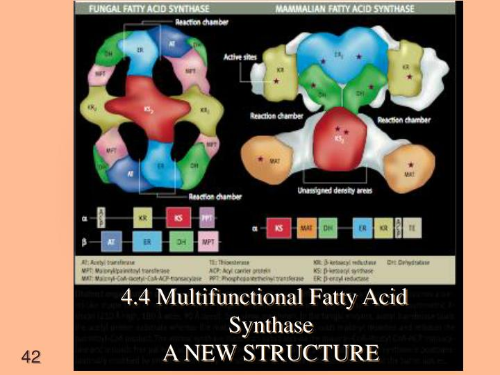 4.4 Multifunctional Fatty Acid Synthase