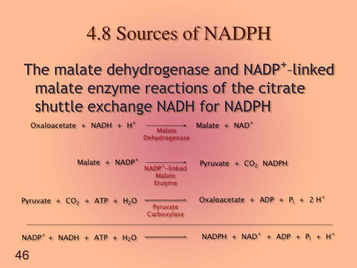 4.8 Sources of NADPH