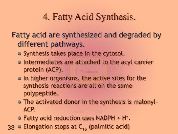 4. Fatty Acid Synthesis.