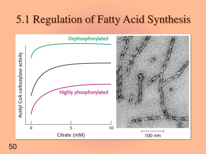 5.1 Regulation of Fatty Acid Synthesis