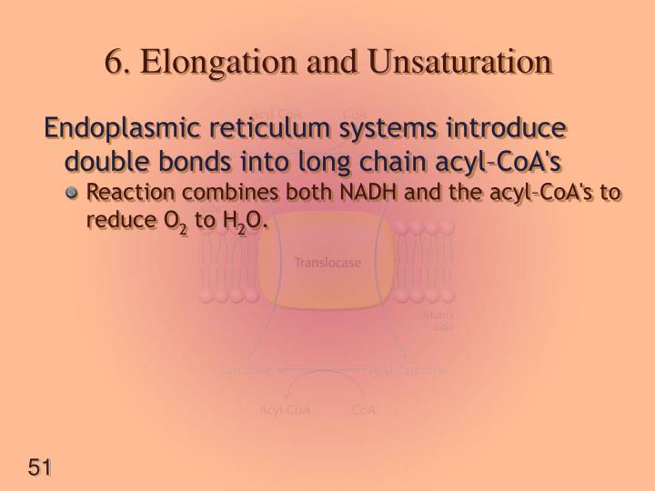6. Elongation and Unsaturation