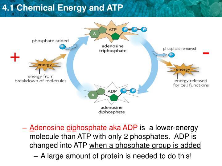 phosphate removed