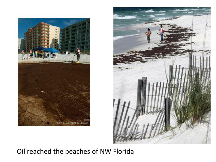 Oil reached the beaches of NW Florida