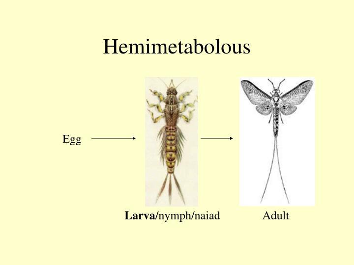 Hemimetabolous