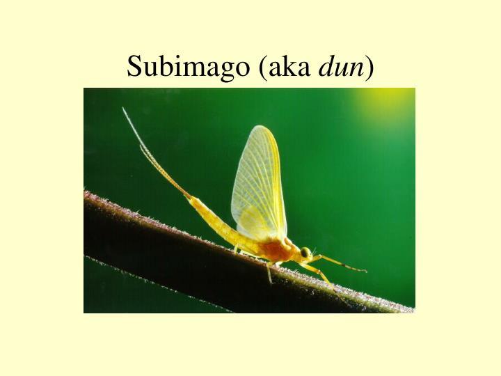 Subimago (aka