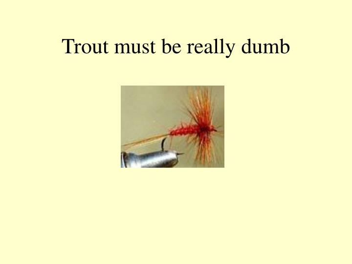 Trout must be really dumb