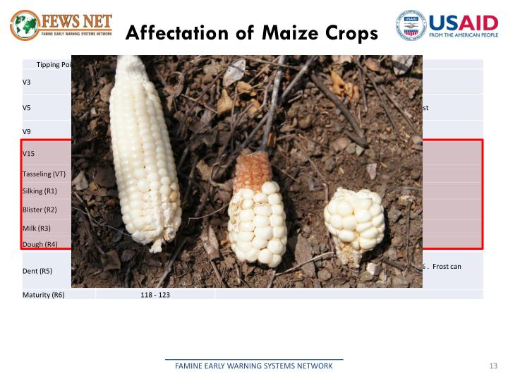 Affectation of Maize Crops