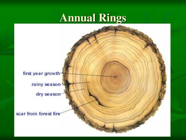 Annual Rings