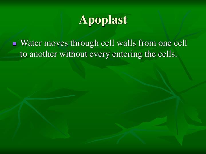 Apoplast