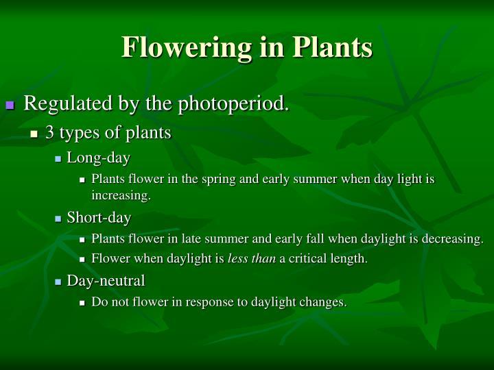 Flowering in Plants