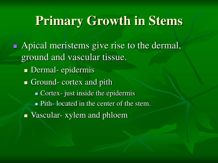 Primary Growth in Stems
