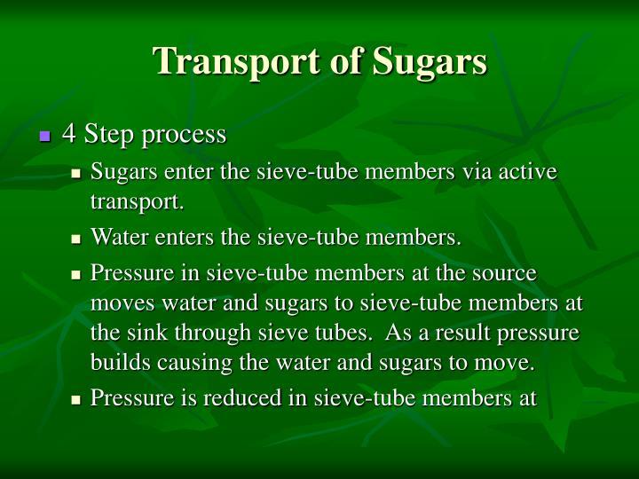 Transport of Sugars