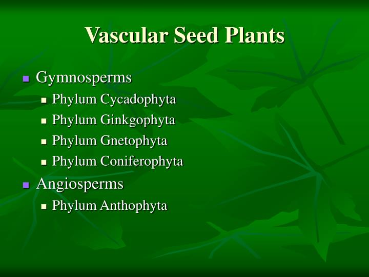 Vascular Seed Plants