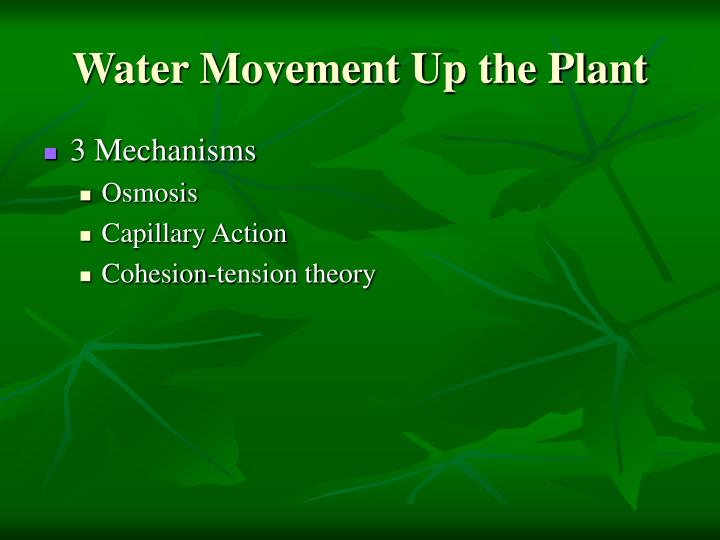 Water Movement Up the Plant