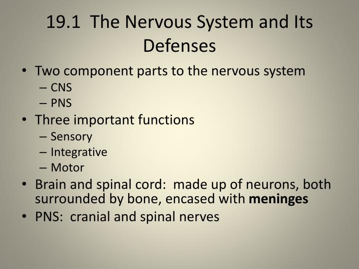 19.1  The Nervous System and Its Defenses