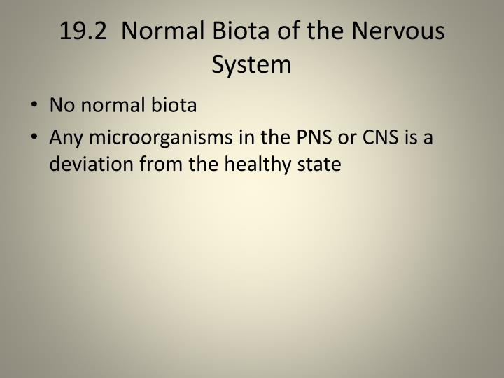 19.2  Normal Biota of the Nervous System