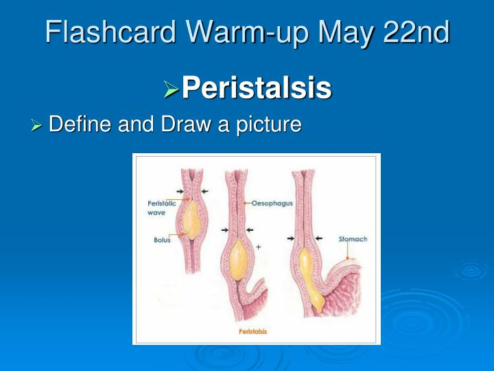 Flashcard Warm-up May 22nd