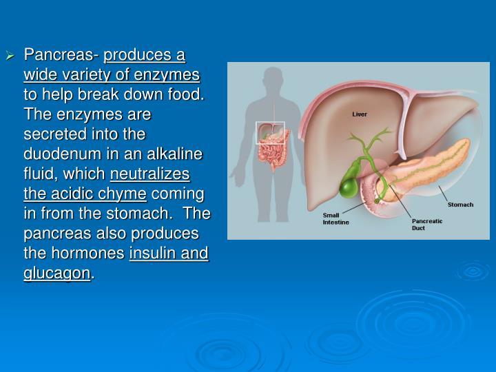Pancreas-