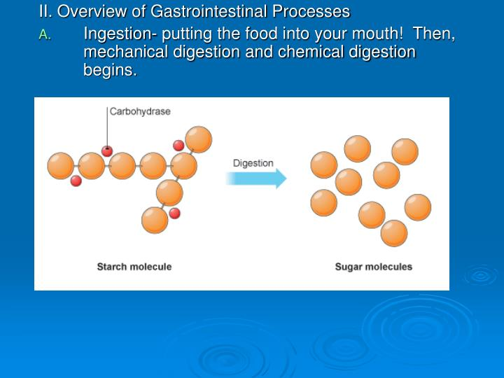 II. Overview of Gastrointestinal Processes