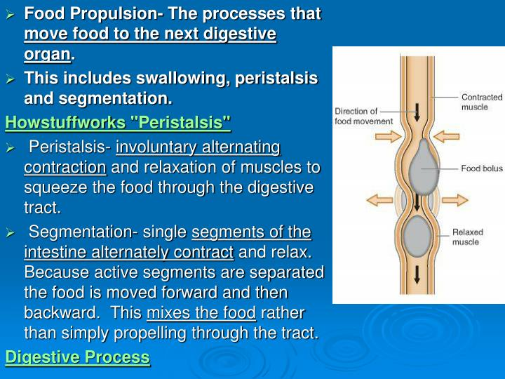 Food Propulsion- The processes that