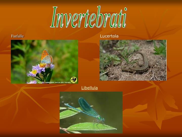 Invertebrati