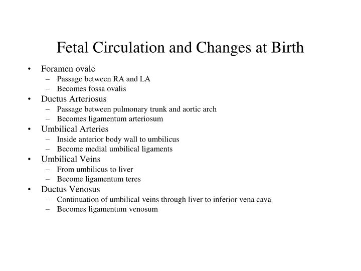 Fetal Circulation and Changes at Birth