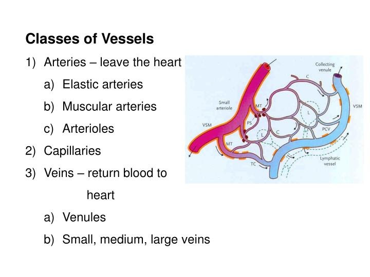 Classes of Vessels