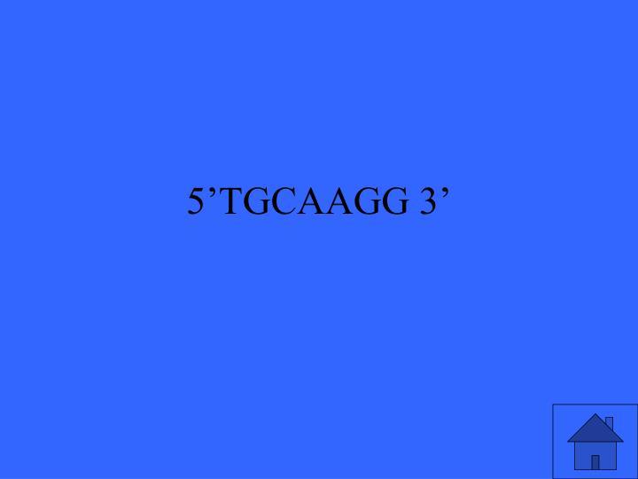 5'TGCAAGG 3'