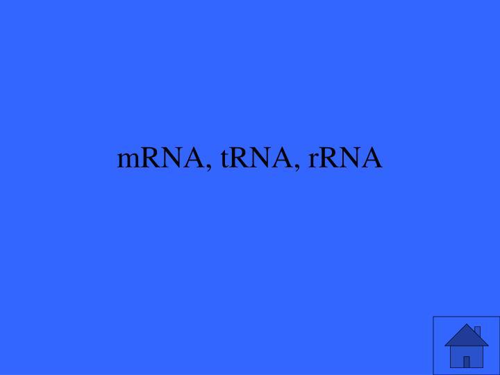 mRNA, tRNA, rRNA