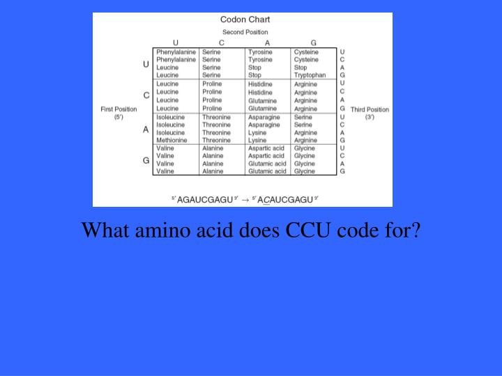 What amino acid does CCU code for?