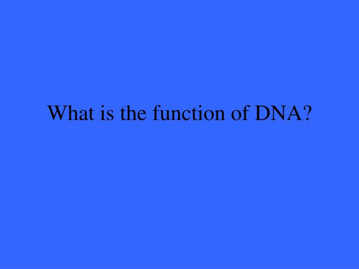 What is the function of DNA?