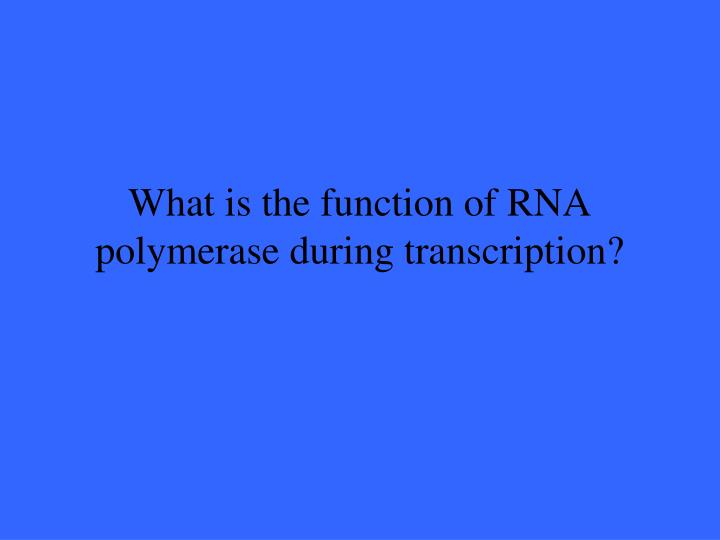 What is the function of RNA polymerase during transcription?