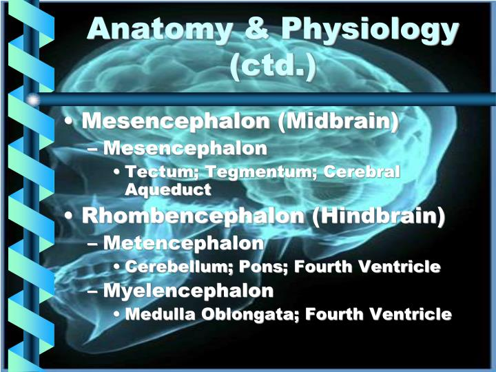 Anatomy & Physiology (ctd.)