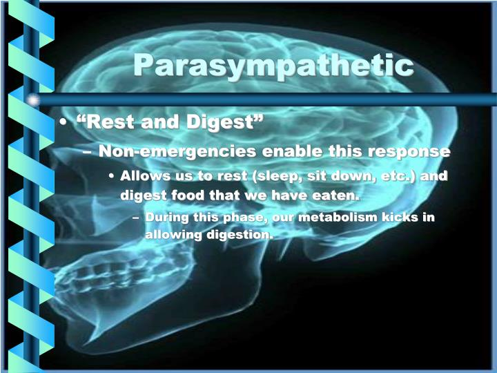 Parasympathetic