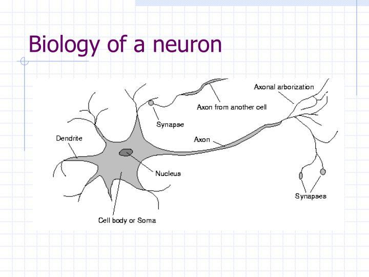 Biology of a neuron