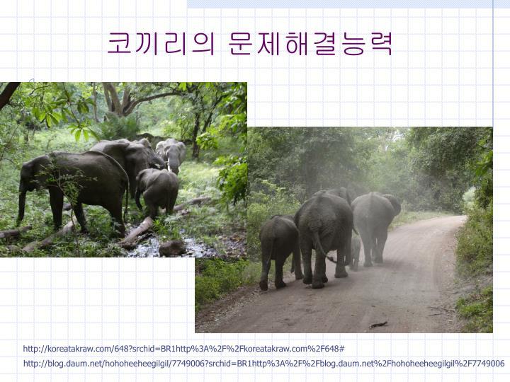 코끼리의 문제해결능력