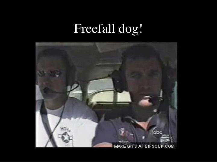 Freefall dog!