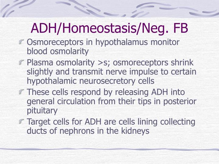 ADH/Homeostasis/Neg. FB