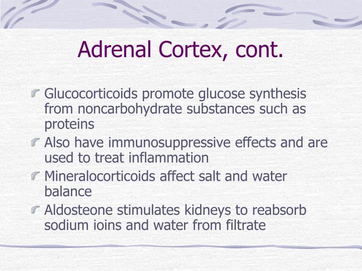 Adrenal Cortex, cont.