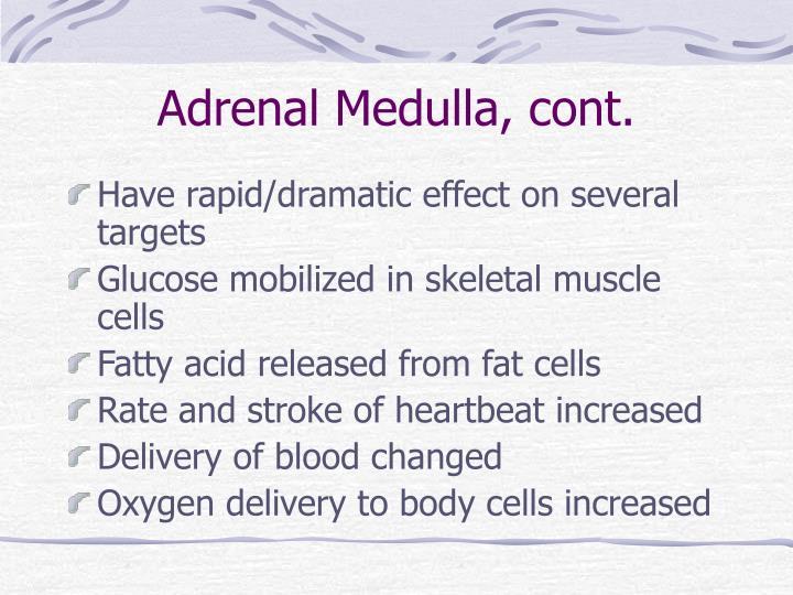Adrenal Medulla, cont.