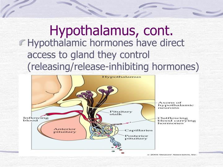 Hypothalamus, cont.