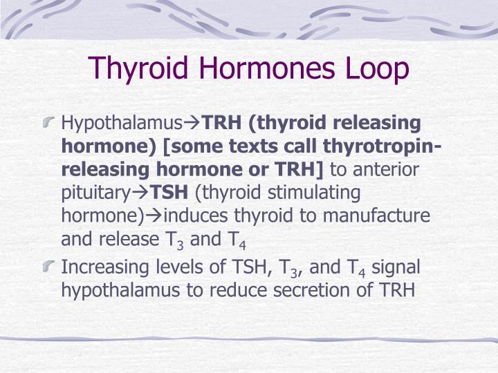 Thyroid Hormones Loop