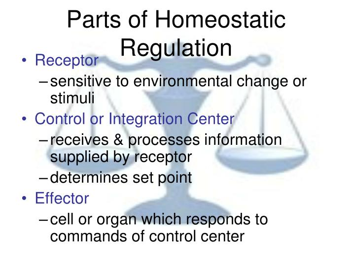Parts of Homeostatic Regulation