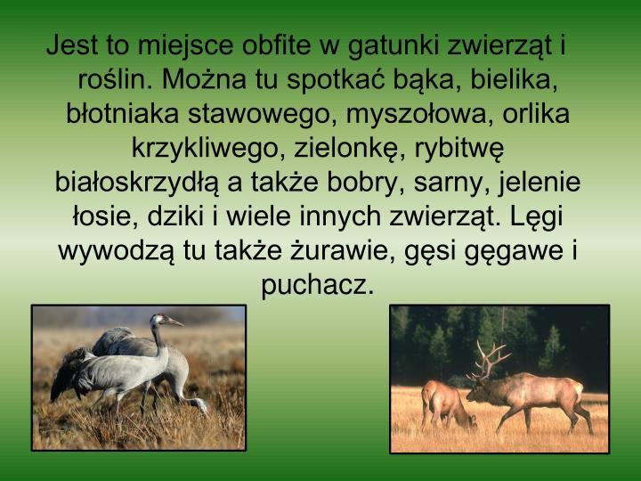 Jest to miejsce obfite w gatunki zwierząt i roślin. Można tu spotkać bąka, bielika, błotniaka stawowego, myszołowa, orlika krzykliwego, zielonkę, rybitwę białoskrzydłą a także bobry, sarny, jelenie łosie, dziki i wiele innych zwierząt. Lęgi wywodzą tu także żurawie, gęsi gęgawe i puchacz.