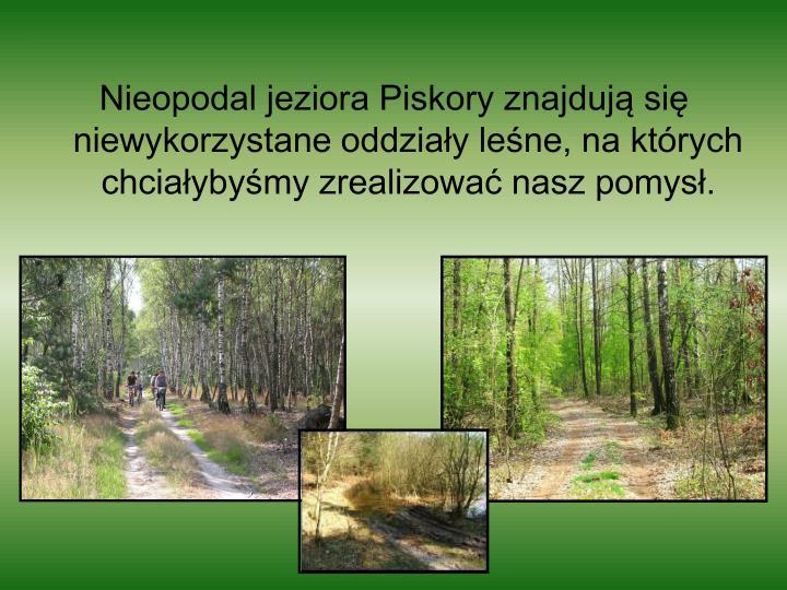 Nieopodal jeziora Piskory znajdują się niewykorzystane oddziały leśne, na których chciałybyśmy zrealizować nasz pomysł.