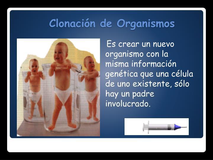 Es crear un nuevo organismo con la misma información genética que una célula de uno existente, sólo hay un padre involucrado.