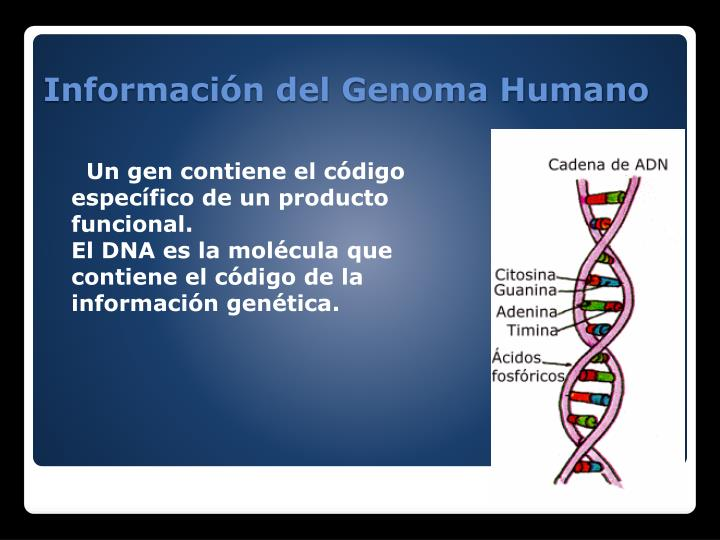 Un gen contiene el código específico de un producto funcional.