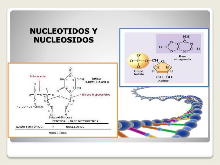 NUCLEOTIDOS Y NUCLEOSIDOS