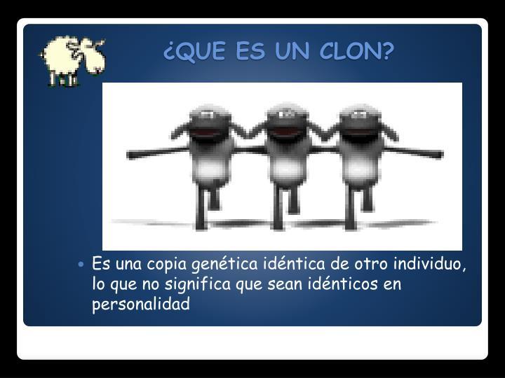 Es una copia genética idéntica de otro individuo, lo que no significa que sean idénticos en personalidad